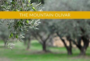 The Mountain Olivar
